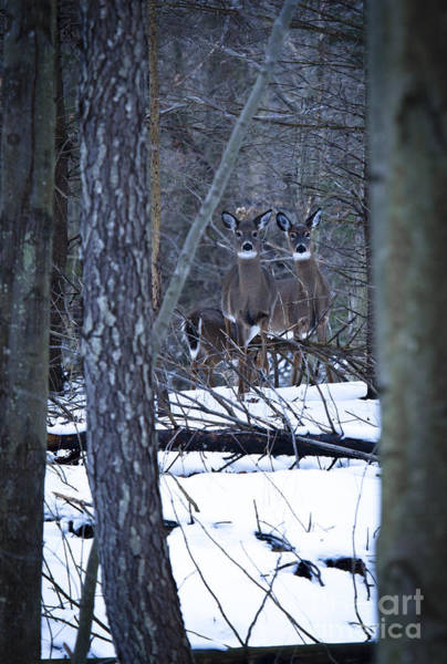 Wall Art - Photograph - Whitetail Habitat by Roger Bailey