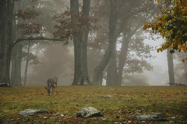 Photograph - Whitetail In Fog by Lee Kirchhevel