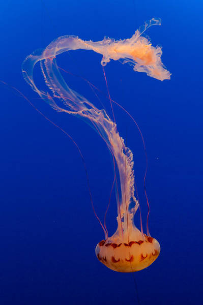 Photograph - Who What Where When Purple Striped Jelly 1 by Scott Campbell