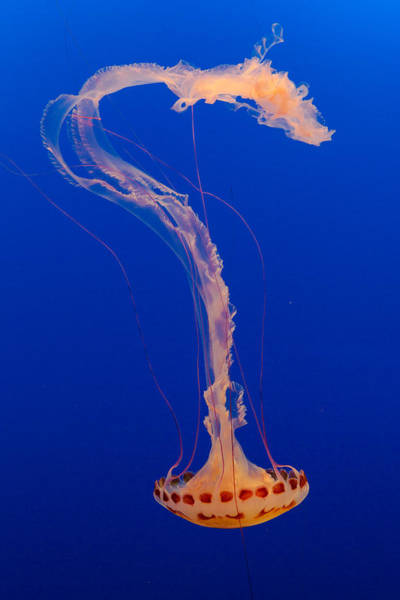Photograph - Who What Where When Purple Striped Jelly 2 by Scott Campbell