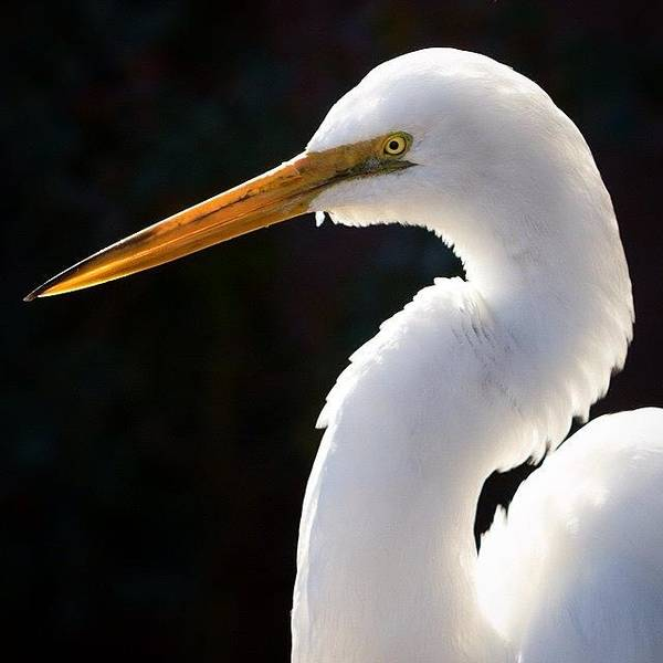 Egret Photograph - Who Would Have Thought by Tiffany Wuest