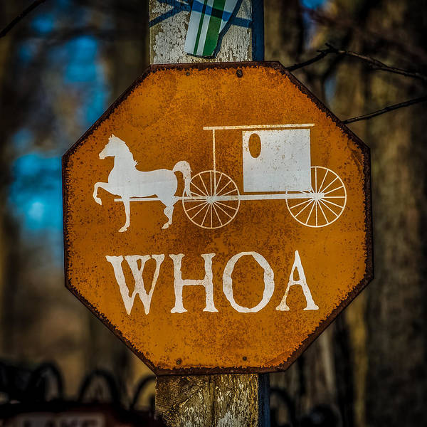 Amish Country Photograph - Whoa by Paul Freidlund