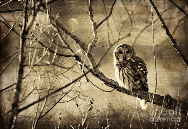 Photograph - Whoooo's There by Pam  Holdsworth