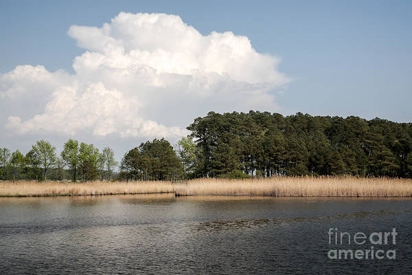 Photograph - Why They Call It The Blackwater Wildlife Refuge by William Kuta