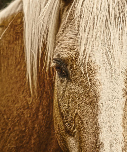 Photograph - Wickenburg's Palomino Gold by Amanda Smith