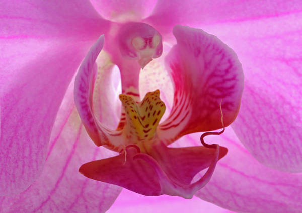 Neon Pink Photograph - Wide Awake by Juergen Roth