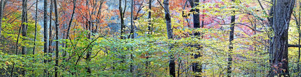 Photograph - Wide Woods In The Fall by Duane McCullough