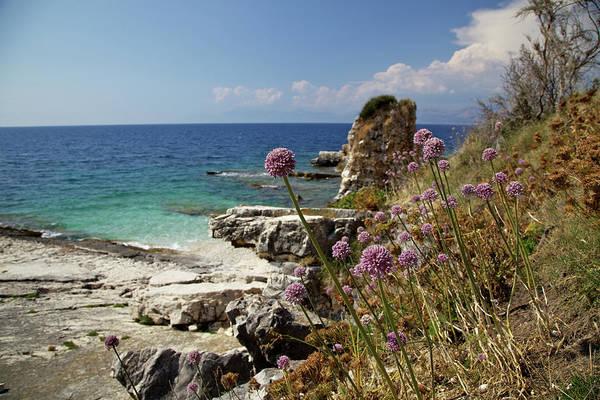 Endurance Wall Art - Photograph - Wild Aliums Growing On The Coast, Corfu by David Cayless