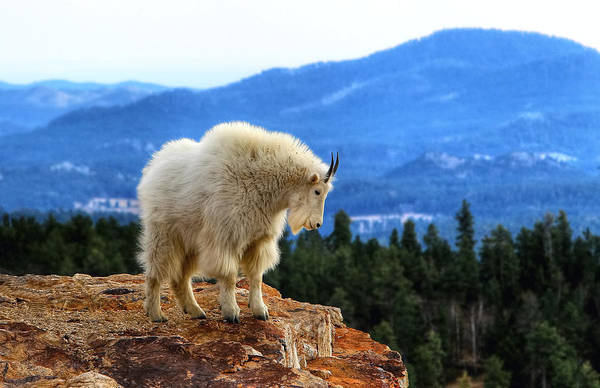Photograph - Wild America by Paul Svensen