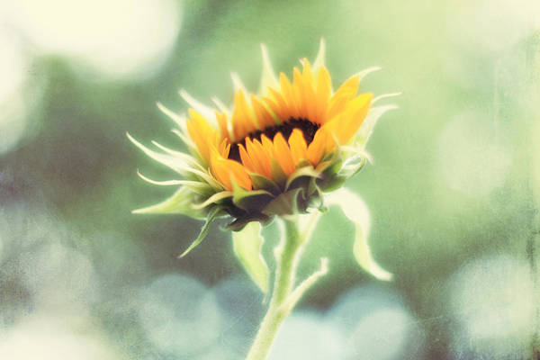 Wall Art - Photograph - Wild And Free by Amy Tyler