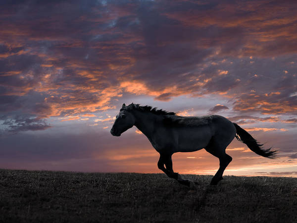 Free Range Photograph - Wild And Free by Leland D Howard