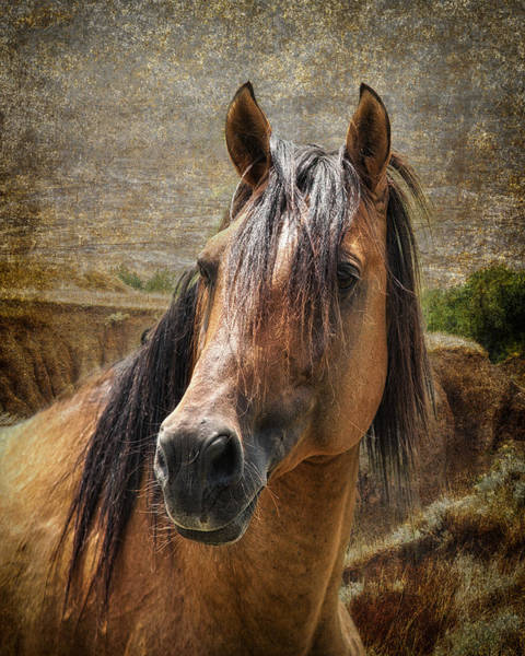 Wall Art - Photograph - Wild At Heart by Ron  McGinnis
