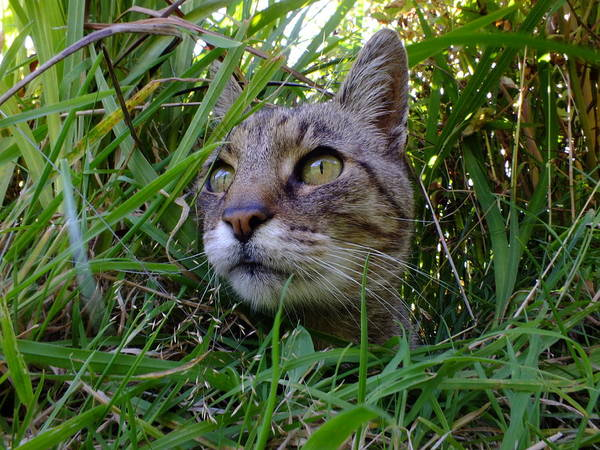 Photograph - Wild Beast In The Long Grass by Phil Darby