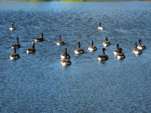 Photograph - Wild Birds And Pond by Frank Romeo