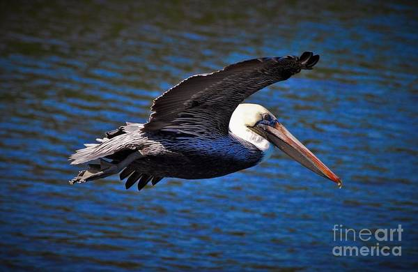 Soar Photograph - Wild Blue Yonder by Quinn Sedam