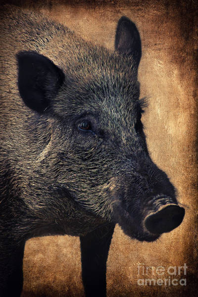 Wall Art - Photograph - Wild Boar  by Angela Doelling AD DESIGN Photo and PhotoArt