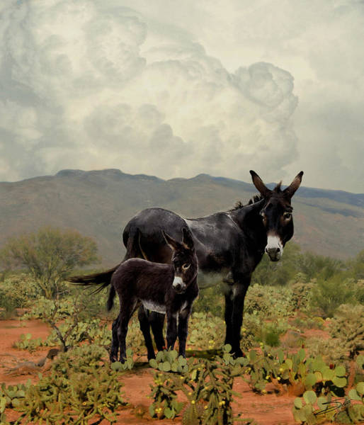 Gold Rush Wall Art - Painting - Wild Burros Of Tucson by M Spadecaller