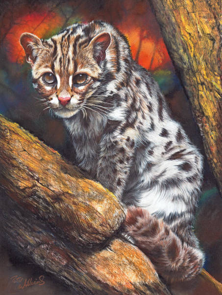 Pastel - Wild Cat by Peter Williams
