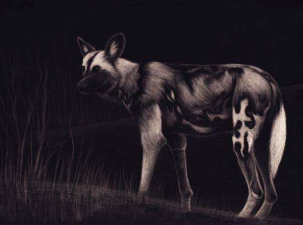 African Animal Drawing - Wild Dog by Sesh Artwork