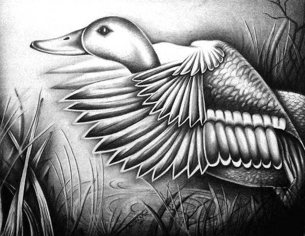 Drawing - Wild Duck by Owen Lafon