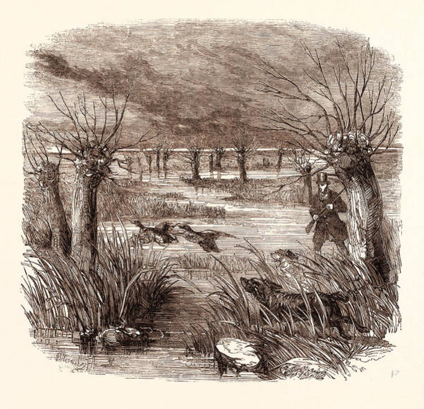 Duck Hunting Drawing - Wild Duck Shooting In December, Shotgun, Hunting, Wild by English School