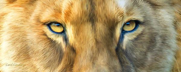 Mixed Media - Wild Eyes - Lioness by Carol Cavalaris