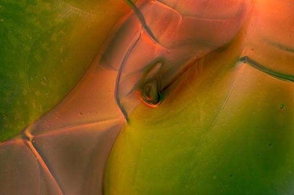Photograph - Wild Eyes by Omaste Witkowski