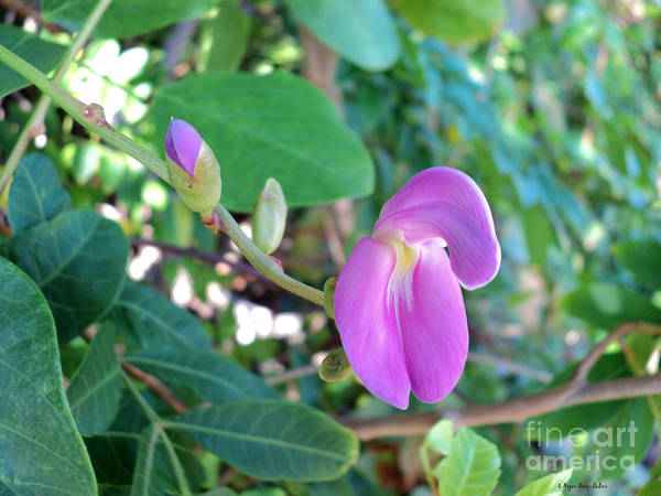 Photograph - Wild Flower By Megan Dirsa-dubois by Megan Dirsa-DuBois