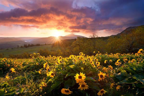 Photograph - Wild Flower Delight by Andrew Kumler