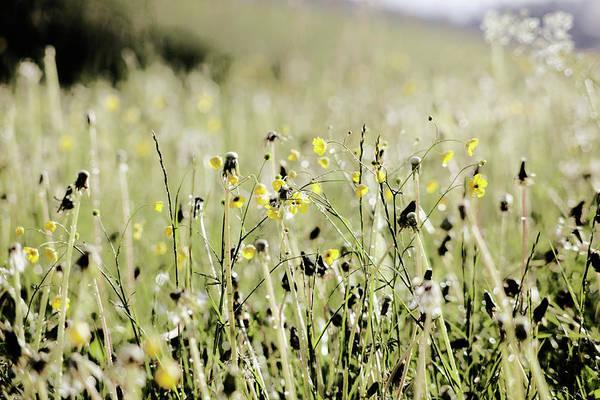 Photograph - Wild Flower Field by Rolfo