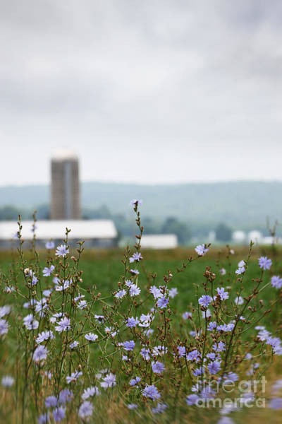 Photograph - Wild Flowers Growing In Farm Fields by Sandra Cunningham