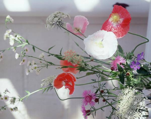 Wild Flower Photograph - Wild Flowers by Horst P. Horst