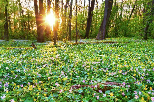 Hardwood Photograph - Wild Flowers In Evening Light by Martin Wahlborg