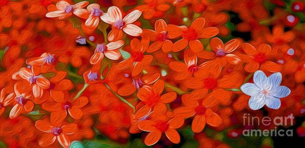 Wild Life Mixed Media - Wild Flowers by Jon Neidert