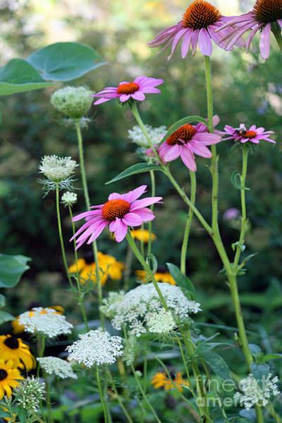 Photograph - Wild Flowers by Karen Adams