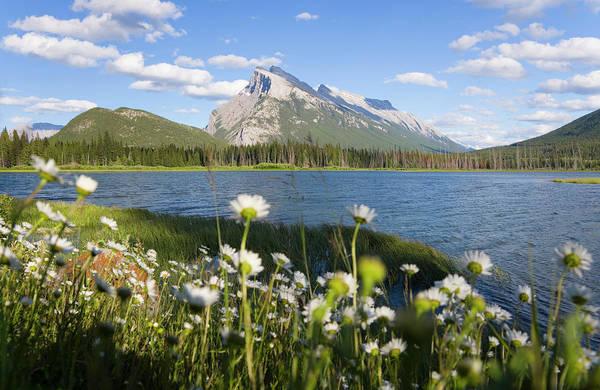 Vermillion Lakes Wall Art - Photograph - Wild Flowers, Mt Rundle, Vermillion by Peter Adams