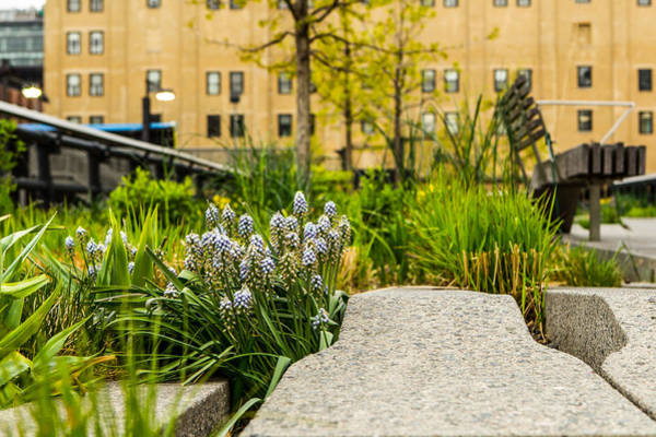 Photograph - Wild Folwers Of The High Line by Dave Hahn