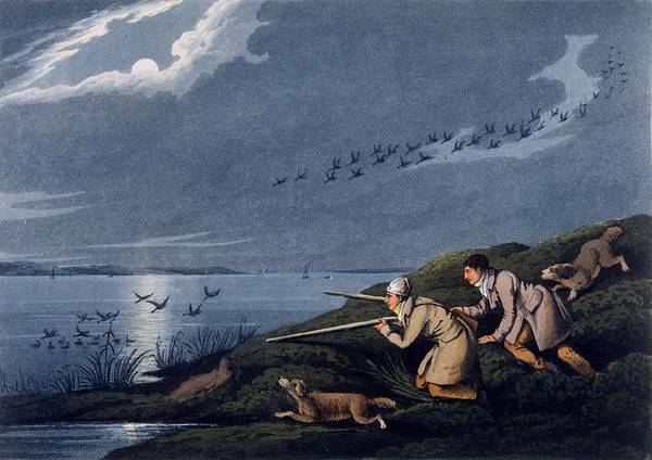 Rifle Drawing - Wild Fowl Shooting, 1820 by Henry Thomas Alken