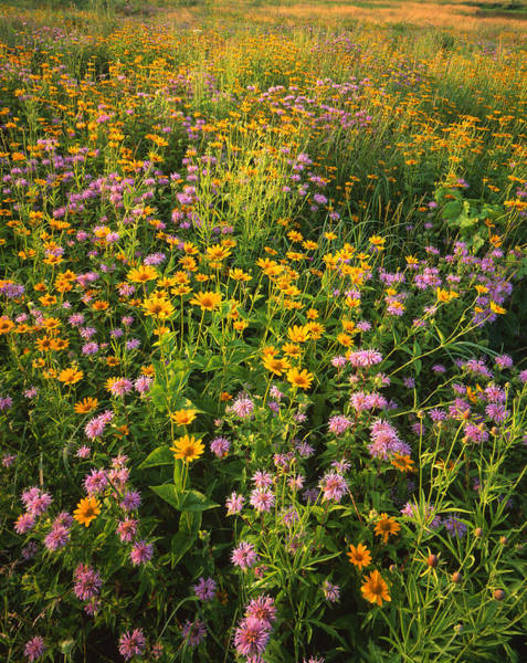 Photograph - Wild Garden by Ray Mathis