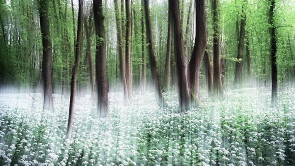 Wood Photograph - Wild Garlic by Burger Jochen