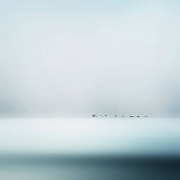 White Water Photograph - Wild Geese by Piet Flour