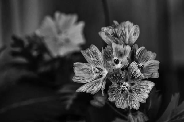 Geranium Wall Art - Photograph - Wild Geraniums by Susan Capuano