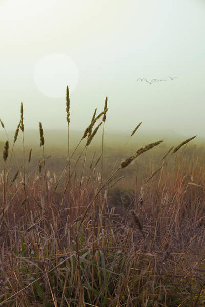 Photograph - Wild Grass by Wes Jimerson