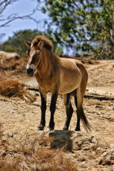 Photograph - Wild Horse by Blake Richards