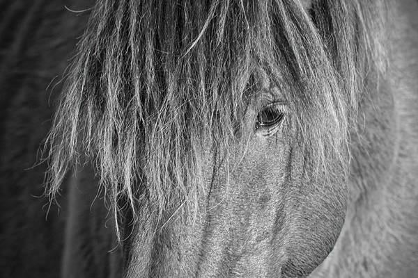 Photograph - Wild Horse Close-up In Black And White by Bob Decker