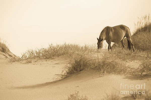 Outer Banks Wall Art - Photograph - Wild Horse by Diane Diederich