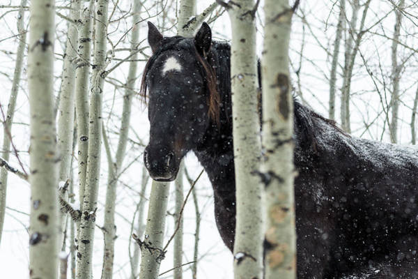 Wall Art - Photograph - Wild Horse In A Snowstorm  Turner by Deb Garside