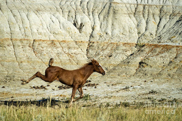 Photograph - Wild Horse North Dakota by Mark Newman