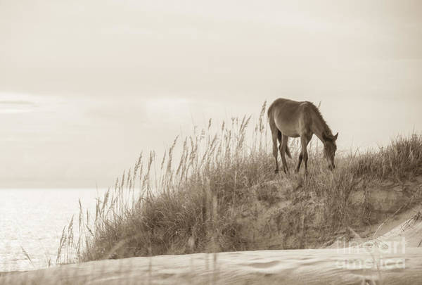 Beautiful Horse Wall Art - Photograph - Wild Horse On The Outer Banks by Diane Diederich