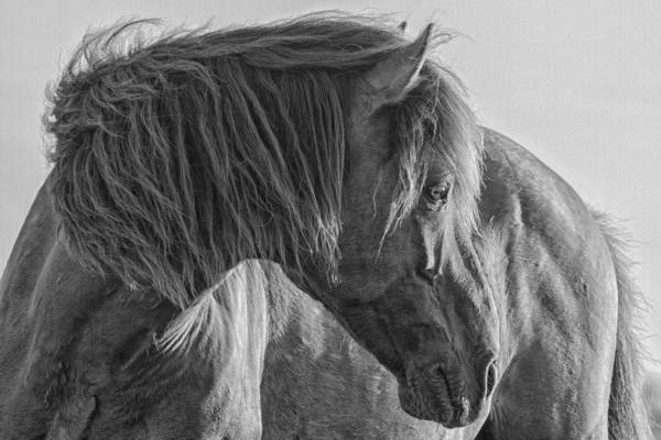 Photograph - Wild Horse On Watch by Bob Decker